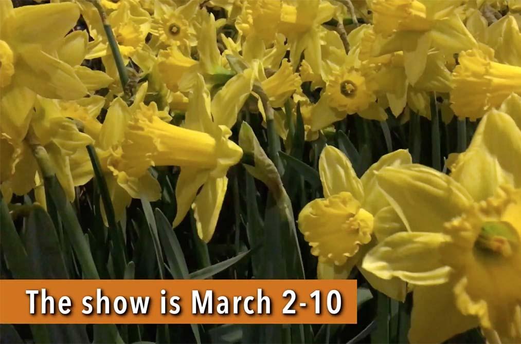 Rediscover 'Flower Power' of the '60s at the Philadelphia Flower Show