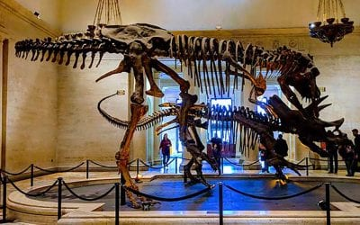Can you keep this vacation secret about free museum day?