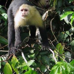 visiting Panama