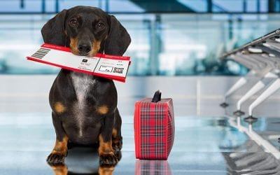 How should you travel with your pet?