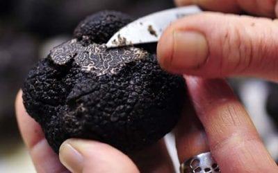 truffle markets