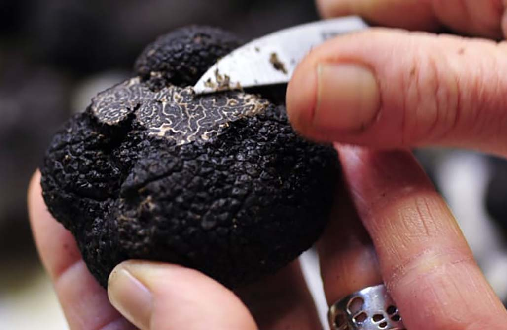 Sunday musings: Black truffles, Google maps update, Airline credit card offers, Air Passenger Safety Radio