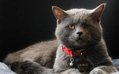 Mt. Washington cat